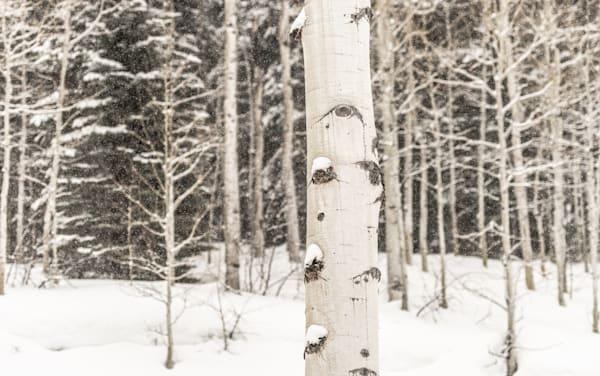 Falling Snow Photography Art   Visual Arts & Media Group Corporation