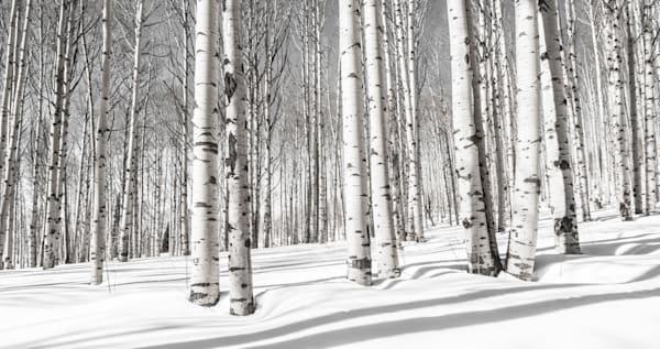 Long Shadows Photography Art   Visual Arts & Media Group Corporation