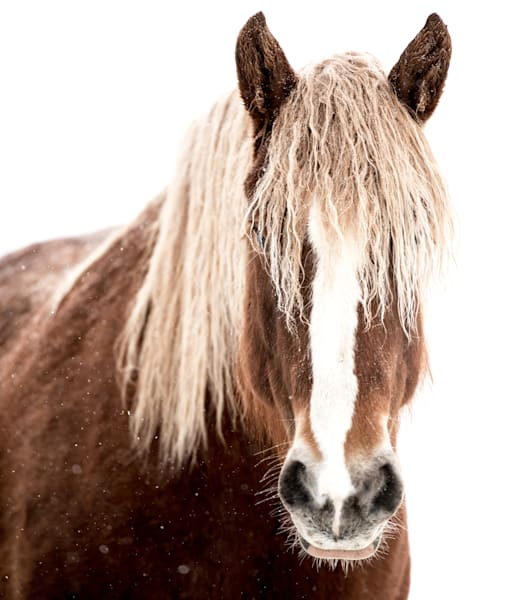 Snowy Horse Photography Art   Visual Arts & Media Group Corporation