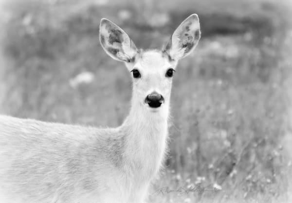 Deer Art in Black & White