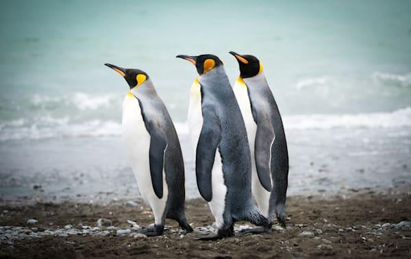Penguin Patrol Photography Art | Visual Arts & Media Group Corporation