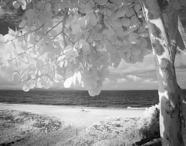 Call Me On My Shell, Hawaii Photography Art | The World in Black and White