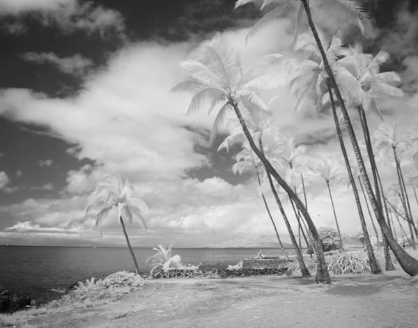 Keep Palm And Carry On, Hawaii Photography Art | The World in Black and White