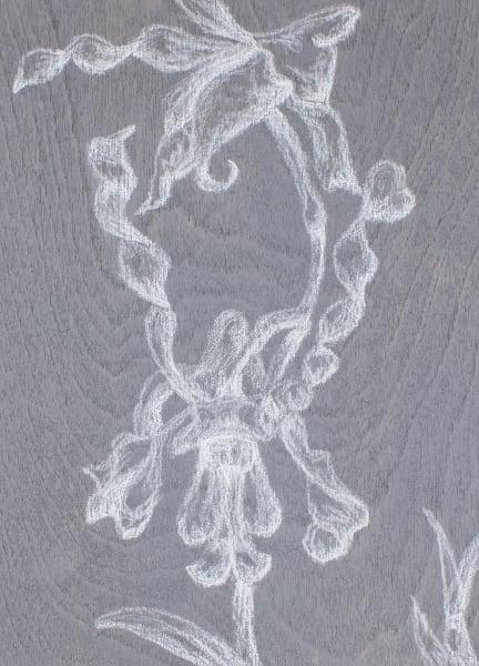 Dendrobium Lasianthera Art   RPAC Gallery