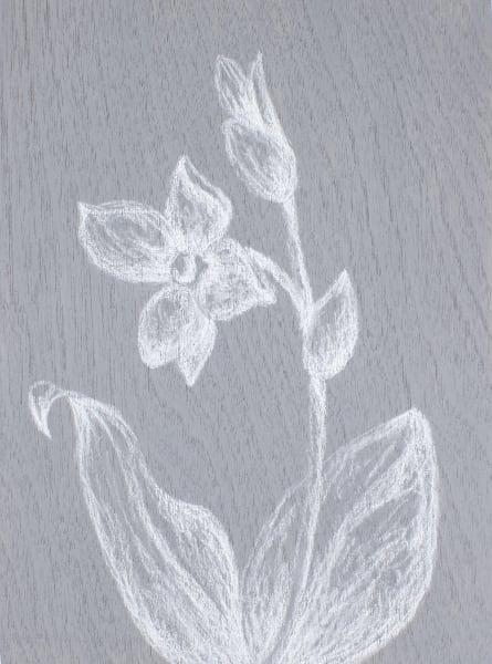 Phragmipedium Besseae Art   RPAC Gallery