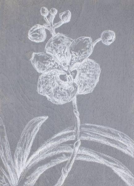 Vanda Sanderiana Art   RPAC Gallery