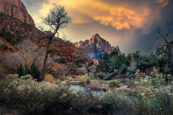 2242 Zion National Park Art | Cunningham Gallery