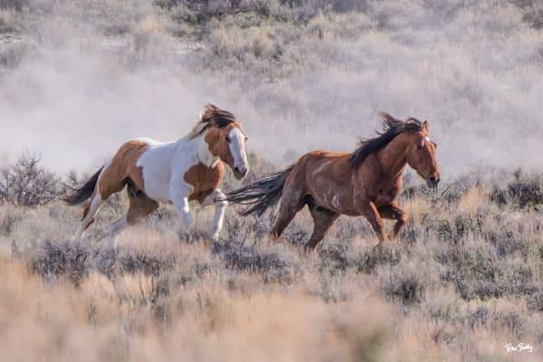 Wild Mustangs Racing Photography Art   Peter Batty Photography