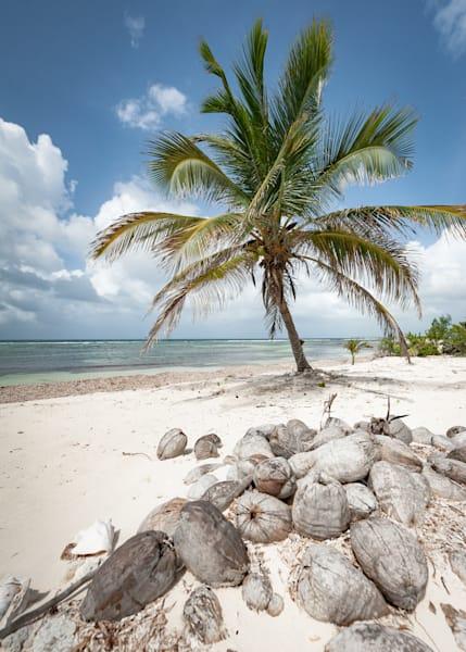 Paradise Vibes Photography Art | Visual Arts & Media Group Corporation
