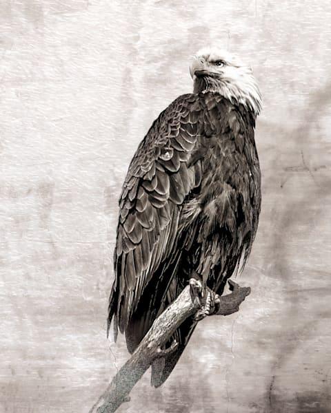 Bald Eagle on Textured Background