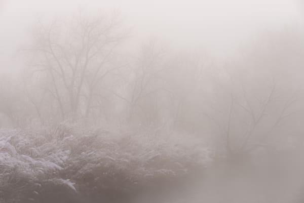 Forest In Fog Photography Art | matt lancaster art