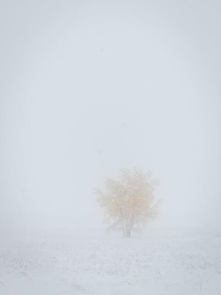 In The Quiet Photography Art | matt lancaster art