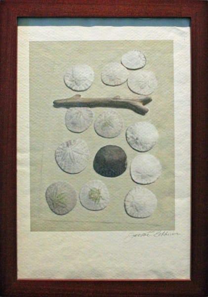 sanddollars, ricepaperprint, framed, beautifulgreen, jackierobbinsstudio, photographicprints