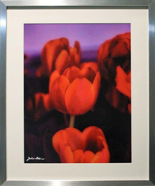 flowers, redtulips. purple, jackierobbinsstudio, photographicprints, readytohang