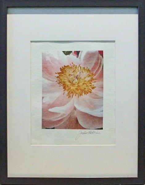 jackierobbinsstudio, handmadericepaper, photographicprints, flowers, peach, pink, peonies