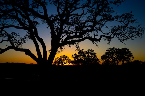Paso Robles Sunset Photography Art   FocusPro Services, Inc.