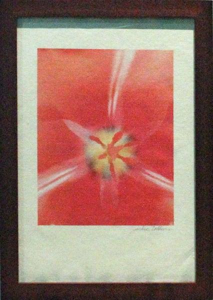 photographicprints, jackierobbinsstudio, peach, pink, framed, ricepaperprint, closeup, tulip, intimate