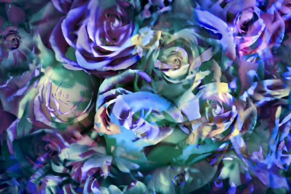Boquet Of Roses Art | KJ's Studio