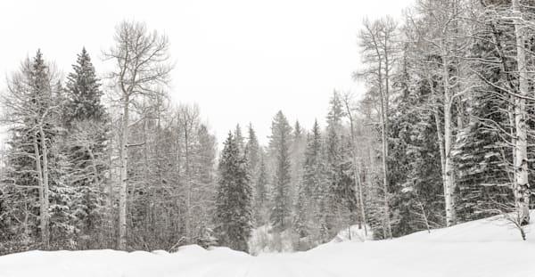 Winter Wonderland  Photography Art   Visual Arts & Media Group Corporation