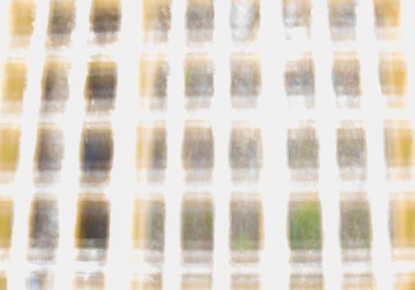 Grid Wide Yellow Photography Art | TERESA BERG PHOTOGRAPHY