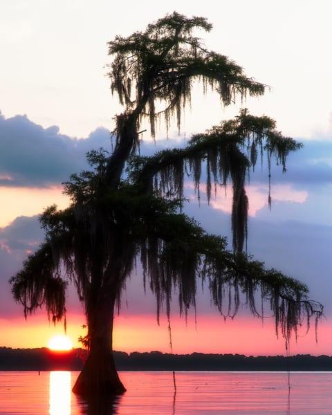 Mystic Maurepas - Louisiana swamp fine-art photography prints