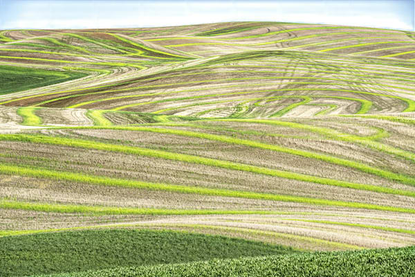 Delicate Shades Of Palouse Green Photography Art | Monty Orr Photography