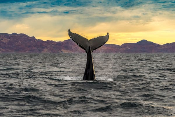 Baja Sunrise Photography Art | Garsha18 Fine Art Photography