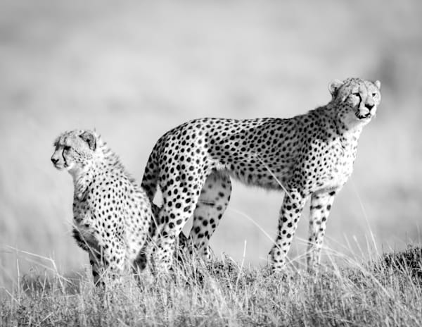Spotted Beauty ( Black & White ) Photography Art   Visual Arts & Media Group Corporation