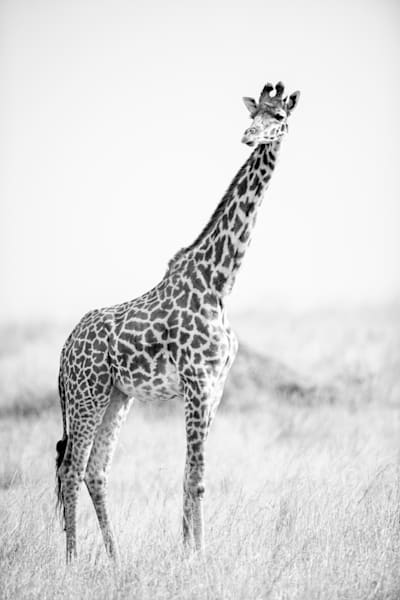 Proud And Tall  Photography Art | Visual Arts & Media Group Corporation