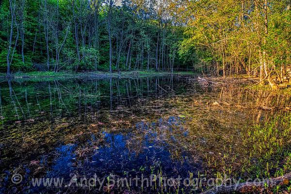 Early Mornig Light on Duck Pond