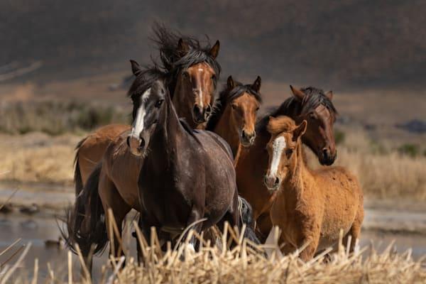 Washoe Wild Photography Art | Danehy Photography