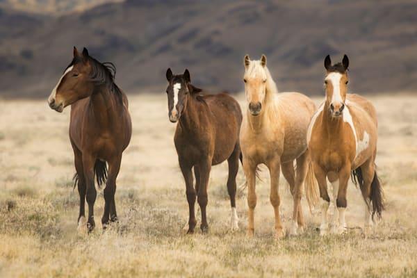 Family of Four wild horse print
