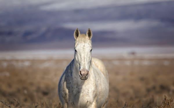 white horse, wild horse print