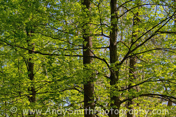Trees At Duck Pond In The Spring Art | Andy Smith Photography