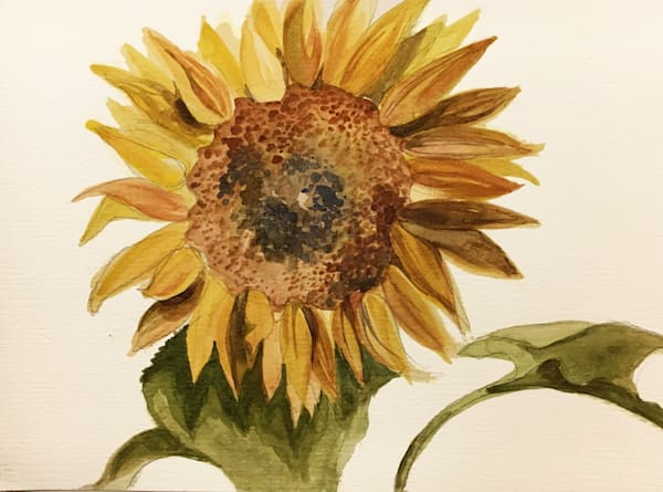 Sunflower Art   Christina Sandholtz Art