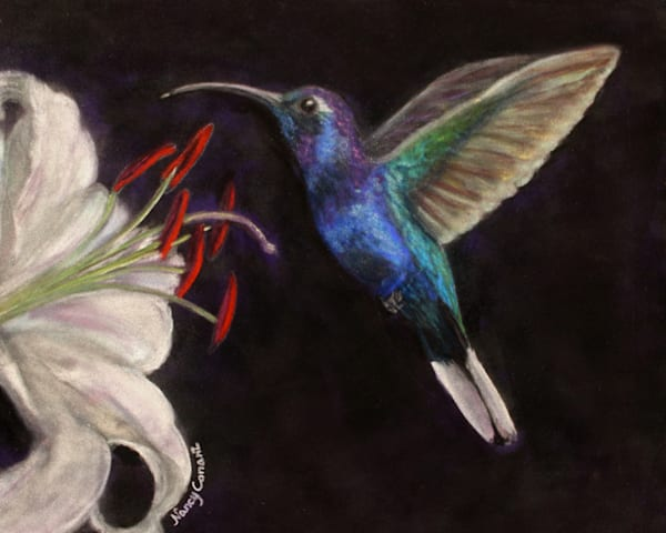 Violet Sawbrewings Hummingbird by Nancy Conant