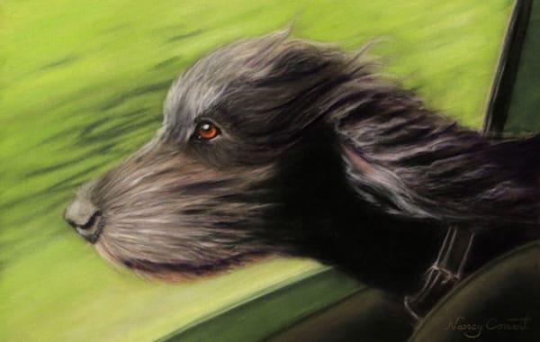 Dog ride in car, Joyride by Nancy Conant