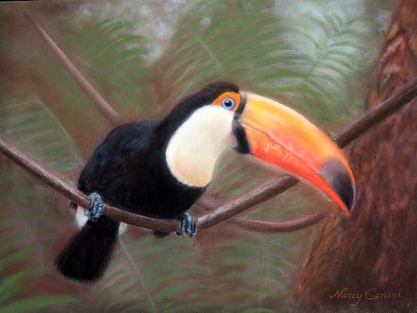toco toucan by Nancy Conant is a toucan painting