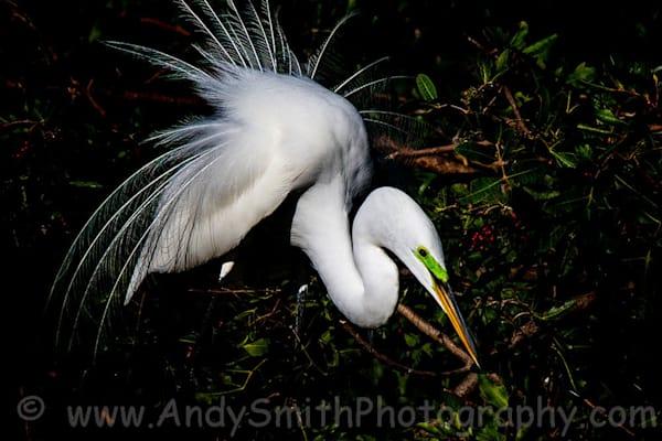 Fine Art Photographs of Wading Birds