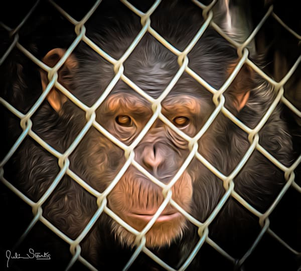 Chimp In Jail!   Painted Photography Art   Julian Starks Photography LLC.