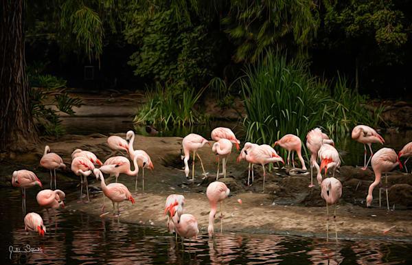 "A Flock Of ""Flamingos""   Painted Photography Art   Julian Starks Photography LLC."