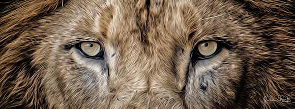 Lion's Eyes Don't Lie  Painted Photography Art   Julian Starks Photography LLC.