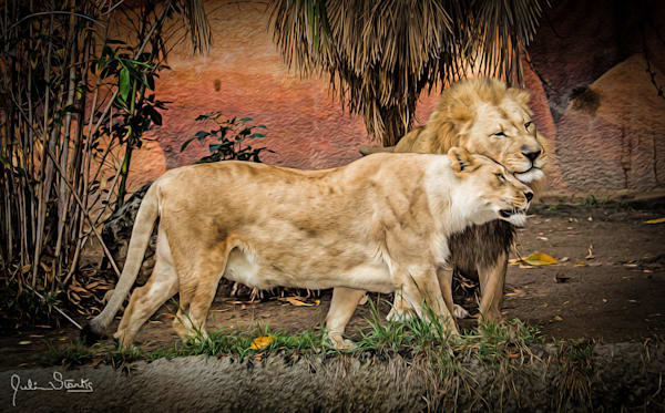 The Loving Lion Couple!   Painted Photography Art   Julian Starks Photography LLC.