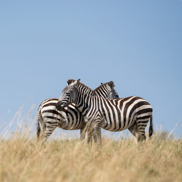 Seeing Stripes  Photography Art | Visual Arts & Media Group Corporation