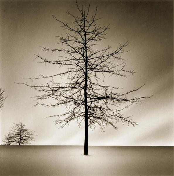 Winter Tree Art | Full Fathom Five Gallery