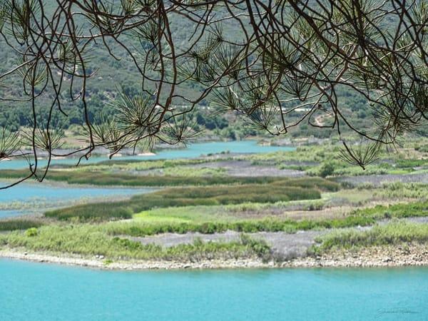Lake Casitas, lake, marshland, water, nature, natural, green, blue, jackierobbinsstudio, photographyprints