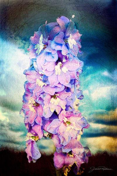 blooms, flowers, landscape, lucious, full. jackierobbinsstudio, photographicprints