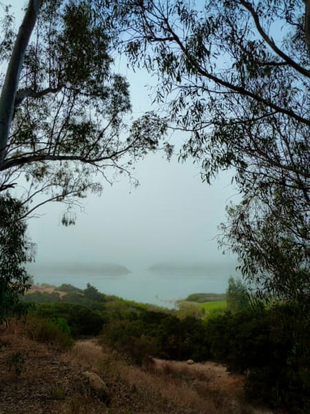 mist, landscape, mutedcolor, mysterious, wonder, imagination, jackierobbinsstudio, photographicprints