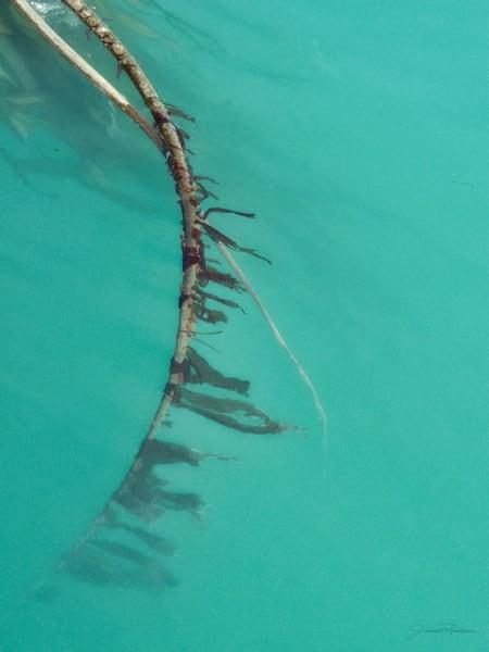 sea, water, wistful, aqua, adrift, drifting, calm, peaceful, green, jackierobbinsstudio, photographicprints