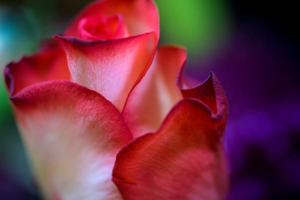 Touched By Passion Photography Art | Kendall Photography & Fine Art